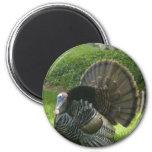 Wild Turkey Magnet Magnet