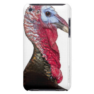 Wild Turkey - Meleagris gallopavo Barely There iPod Cover