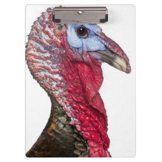 Wild Turkey - Meleagris gallopavo Clipboard