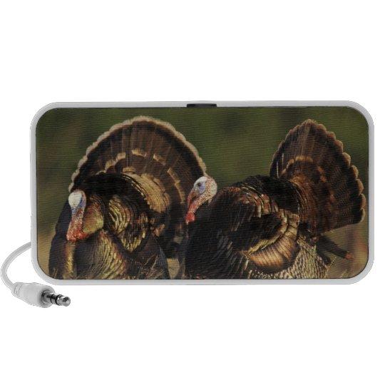 Wild Turkey, Meleagris gallopavo,males Portable Speaker