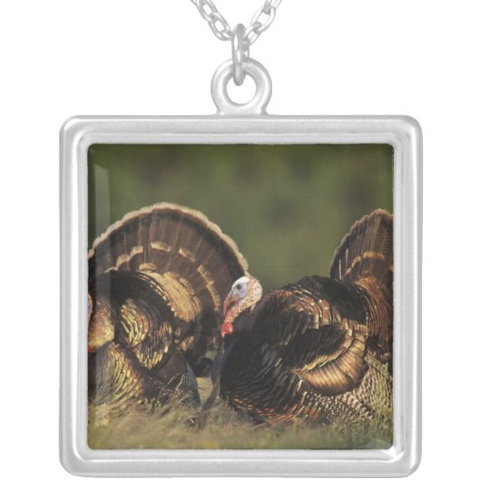 Wild Turkey, Meleagris gallopavo,males Silver Plated Necklace