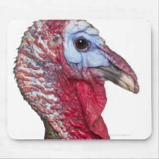 Wild Turkey - Meleagris gallopavo Mouse Pad