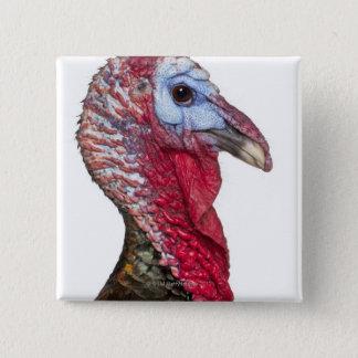 Wild Turkey - Meleagris gallopavo Pinback Button