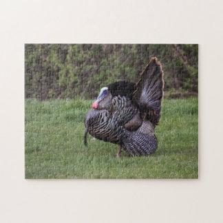 Wild Turkey Jigsaw Puzzle