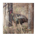 """Wild Turkey Tile<br><div class=""""desc"""">Local Exploration is the name of my blog online (www.local-exploration.com),  which combines my love for hiking and wildlife through photography.  The photographs used on these products were taken by me from my adventures around the Mid-Hudson Valley in New York and my occasional excursions out of the state.</div>"""