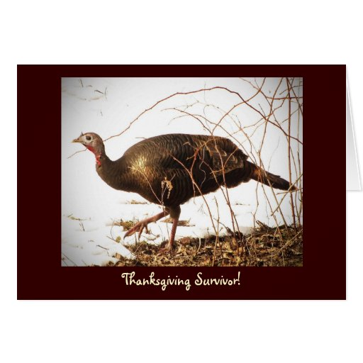 Wild Turkey Vegetarian Card