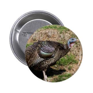 Wild Turkey Vulture - Buzzard - Cathartes aura Button