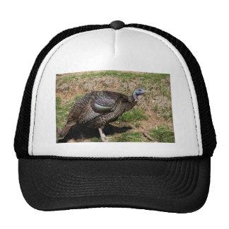 Wild Turkey Vulture - Buzzard - Cathartes aura Trucker Hat