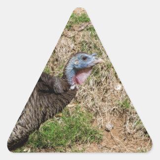Wild Turkey Vulture - Buzzard - Cathartes aura Triangle Sticker