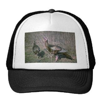 "Wild turkeys, big gobbler with 8"""" beard and his h trucker hat"