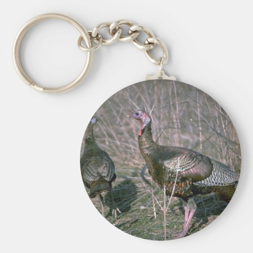 """Wild turkeys, big gobbler with 8"""""""" beard and his h keychain"""