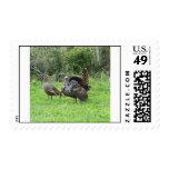 Wild Turkeys Postage Stamps