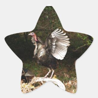Wild Turkeys Star Sticker