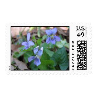 Wild Violets Postage