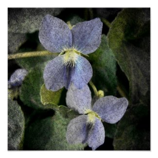 Wild Violets print