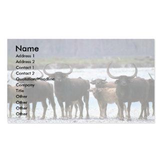 Wild Water Buffalo herd Business Card Templates