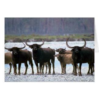 Wild Water Buffalo herd Greeting Card