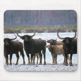 Wild Water Buffalo herd Mousepads