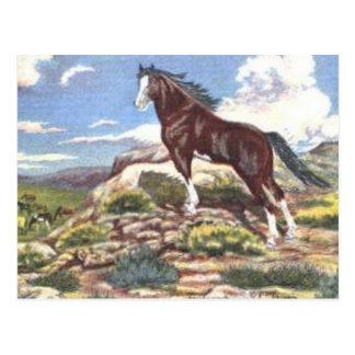 wild west 4 postcard