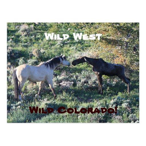 Wild west colorado funny postcard zazzle - Wild west funny ...