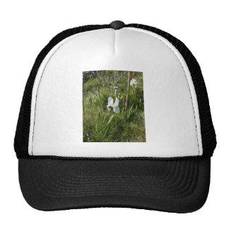 Wild White Canna Lily Hat