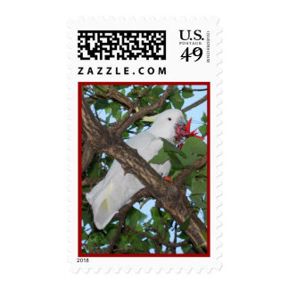 Wild White Cockatoo Parrot Stamps