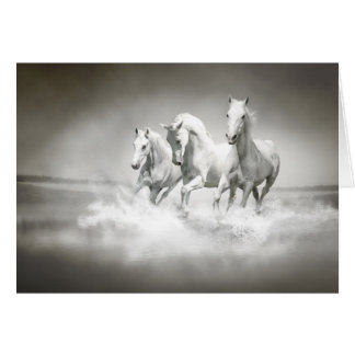 Wild White Horses Note Card