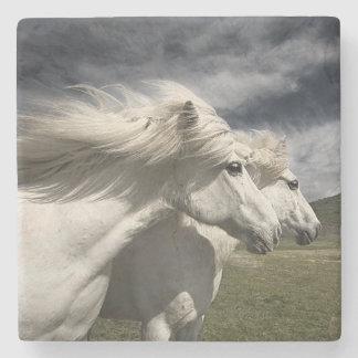 Wild White horses Stone Coaster