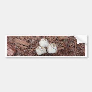 Wild White Mushroom Bumper Sticker