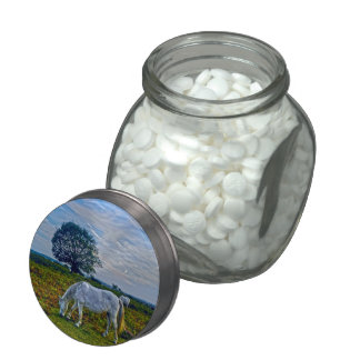 Wild White New Forest Ponies Grazing Equine Photo Glass Candy Jars