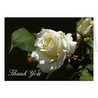 Wild White Rose Greeting Cards