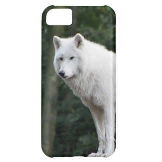 Wild White Wolf Case For iPhone 5C