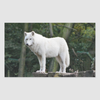 Wild White Wolf Rectangular Sticker