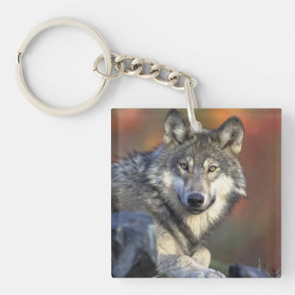 wild wolf square acrylic keychain