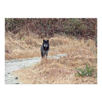Wild Wolf Photo Custom Invites