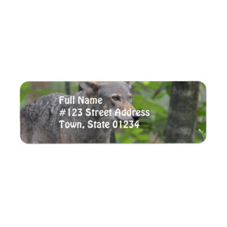Wild Wolf Return Address Labels