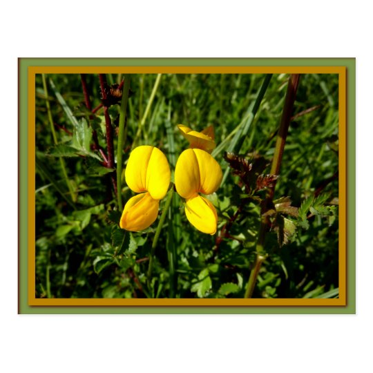 Wild yellow orchids postcard