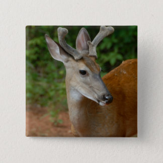 wild young buck button