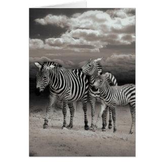 Wild Zebra Socialising in Africa Greeting Card