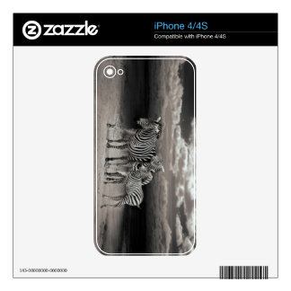 Wild Zebra Socialising in Africa iPhone 4S Decals