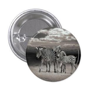 Wild Zebra Socialising in Africa Pinback Button