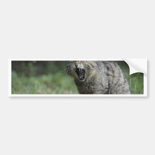 wildcat-3 etiqueta de parachoque
