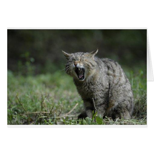 Wildcat Greeting Card