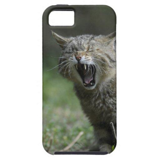Wildcat iPhone 5 Case