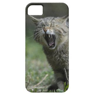 Wildcat iPhone 5/5S Case
