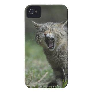 Wildcat iPhone 4 Cover