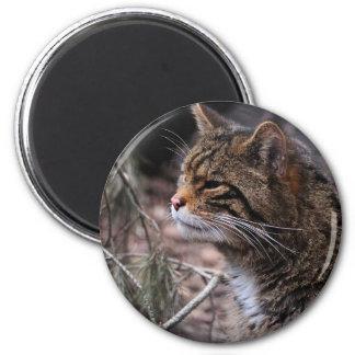Wildcat Contentment 2 magnet