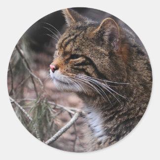 Wildcat Contentment 2 stickers
