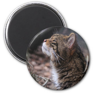 Wildcat Contentment magnet