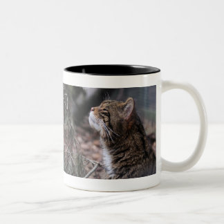 Wildcat Contentment mug